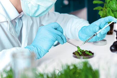 Scientist is conducting experiments, tests with plants in petri dish at laboratory. Biotechnologist is injecting chemical substance to leaves with syringe. Biologist workplace. GMO concept. Stok Fotoğraf