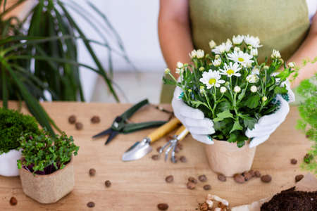 Woman gardeners transplanting plant in ceramic pots on the design wooden table. Concept of home garden. Spring time. Stylish interior with a lot of plants. Taking care of home plants. Template. 免版税图像