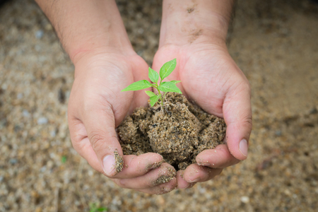 seed bed: The small tree growing organization