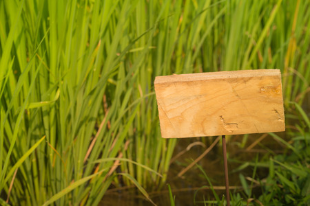 heave: Wooden sign on the type of rice paddy.