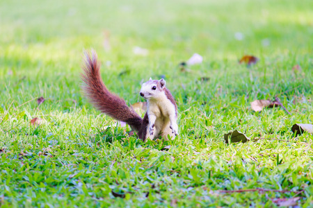 freely: Squirrels living freely in nature.