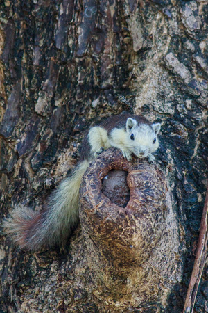 freely: Squirrels living freely in nature Stock Photo