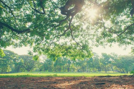 arbre paysage: the tree landscape on city