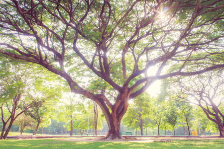 large trees: Large trees in city garden