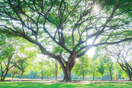 Grote bomen in stadstuin