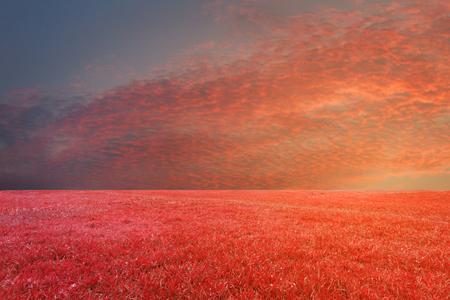campo de flores: paisajes cielo de fondo retocar en la naturaleza