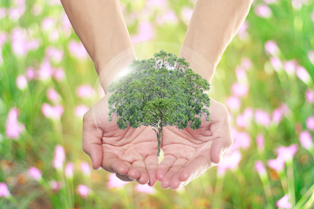 the natural world: natural world in the hands of everyone. Stock Photo