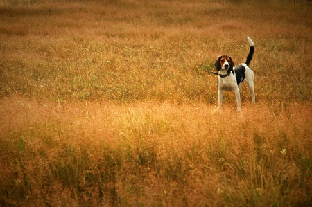 dog in the meadow Stock Photo