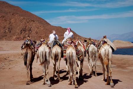 Camel caravan going along the shore photo