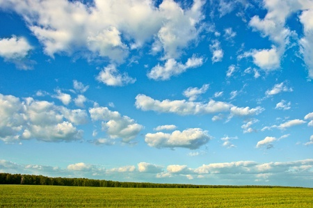 field and forest on a blue sky background Stock Photo