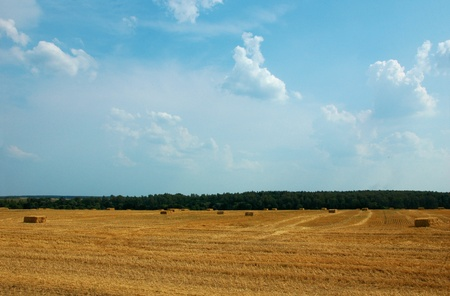 Hay bales of straw in the field photo