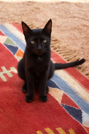 portrait of black cat sitting on red carpet photo