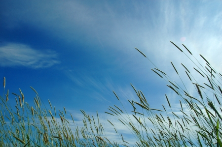 fresh grass in sun light and sky on background photo