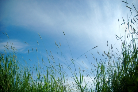 grass in sun light and sky on background photo