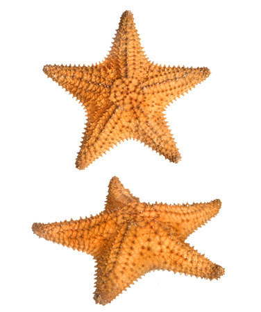 cockle: two views of star fish isolated on white Stock Photo