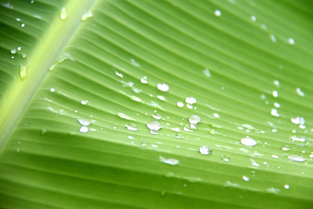 Green leaf background with water drops photo