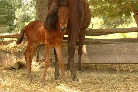 mama: little foal with mama at the stall
