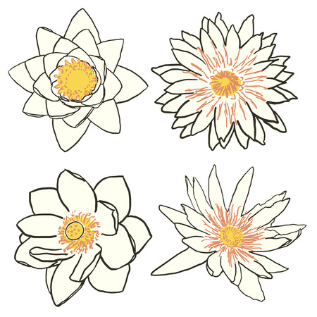 garden flowers: Set of four water flowers, lotus and water lily. Hand drawn vector illustration isolated on white. Oriental symbols of enlightenment and purity