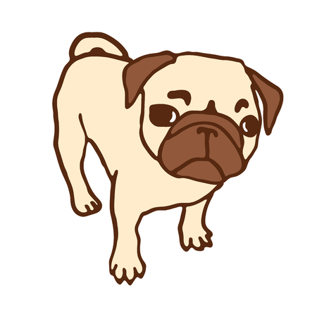looking up: Pug puppy. Hand drawn vector illustration of little cute dog isolated on white. Looking up pug puppy