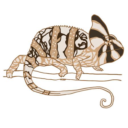 reptile: Hand drawn chameleon. Vector illustration isolated on white. Monochrome reptile