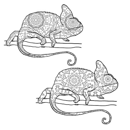 mimicry: Set of two vector illustratons of chamaleon with hand drawn pattern. Reptile isolated on white. Zentangle style illustration. Illustration for adult coloring Illustration