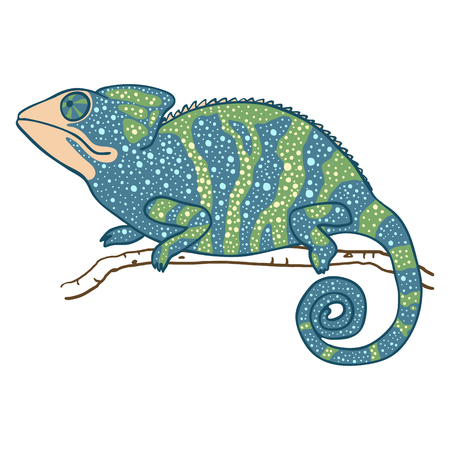 masquerading: illustration of chameleon isolated on white. Green and blue masquerading lizard. chameleon is looking up Illustration
