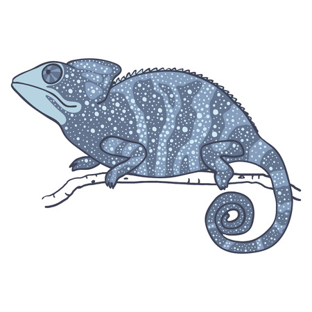 cameleon: illustration of chameleon isolated on white. Dreamy cartoon lizard with night sky pattern. chameleon is looking up at the sky
