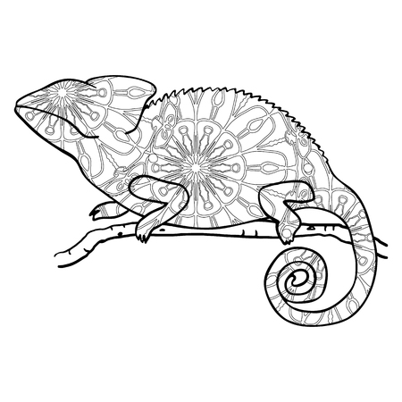 cameleon: Zentangle style chameleon. Stylized vector animal isolated on white. Cute stylized lizard. Monochrome illustration with chameleon for adult coloring