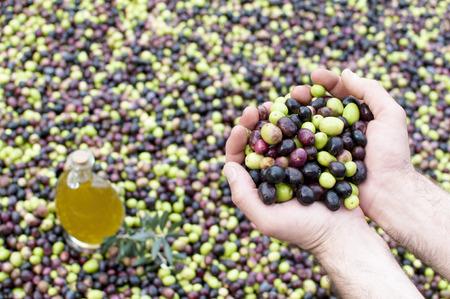 black olive: Olives and olive oil