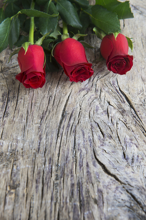 beautiful red roses with old textured wood