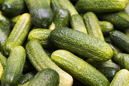 green healthy cucumbers on pile Stock Photo