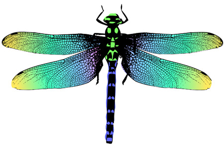 Colorful dragonfly illustration