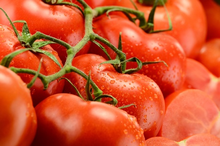 digest: Composition with fresh tomatoes