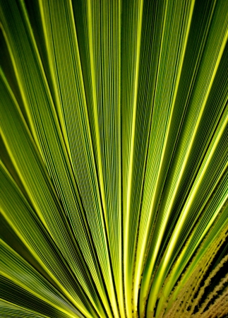 palmtree: Leaf of the palmtree