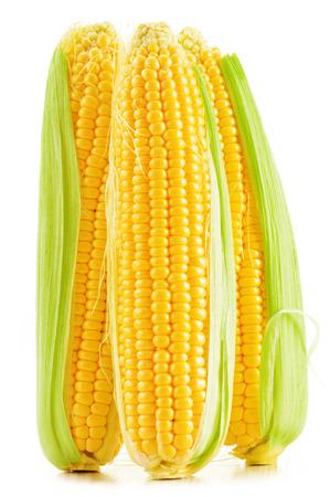 espiga de trigo: Mazorcas de ma�z aislados en un fondo blanco