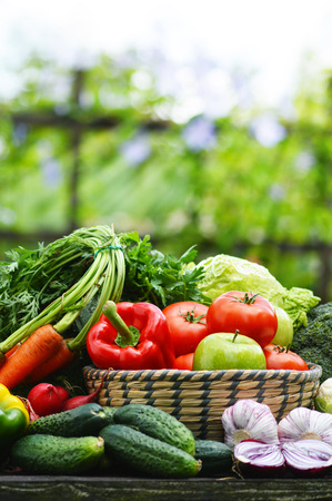 Fresh organic vegetables in wicker basket in the garden  Standard-Bild