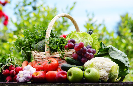 basket: Variety of fresh organic vegetables in the garden.