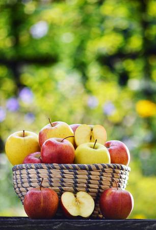 alimentacion balanceada: Las manzanas orgánicas en el jardín. Dieta equilibrada. Foto de archivo