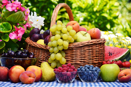 the basket: Basket of fresh organic fruits in the garden