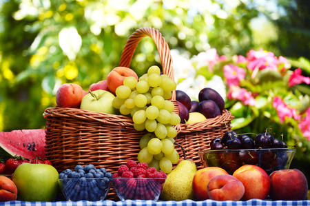 canasta de frutas: Cesta de frutas org�nicas frescas en el jard�n Foto de archivo