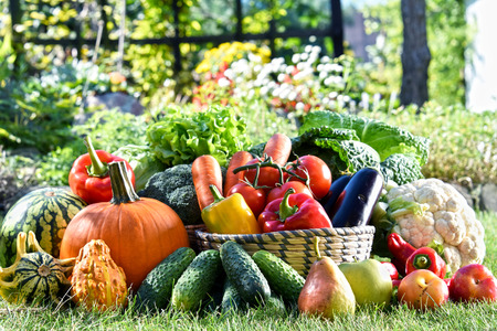 Variety of fresh organic vegetables and fruits in the garden. Balanced diet Banco de Imagens