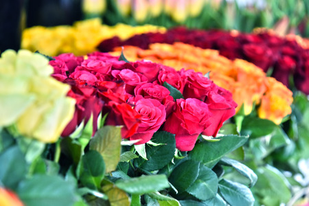 assorted: Cut flowers in the florist. Stock Photo
