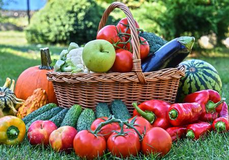 alimentacion balanceada: Variety of fresh organic vegetables and fruits in the garden. Balanced diet Foto de archivo
