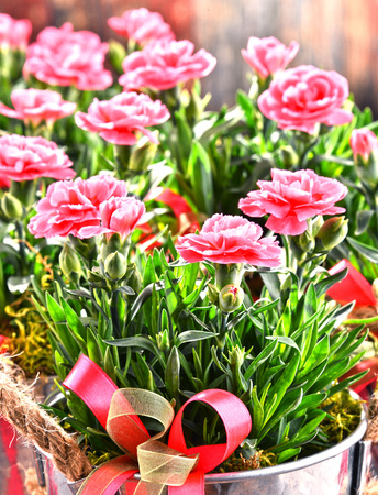 Composition with bouquet of carnations. Stock Photo