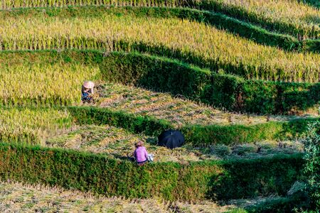 Self-sufficient labor-intensive farming in Mu Cang Chai District, Yen Bai Province, North Vietnam.Traditional sustainable agriculture. Stockfoto - 134019918