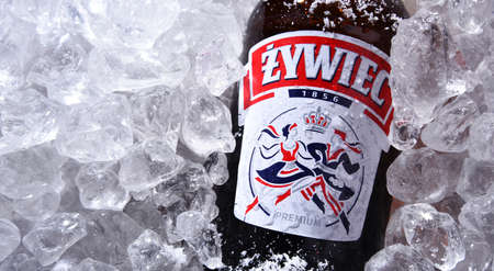 POZNAN, POL - OCT 8, 2020: Bottle of Zywiec Beer, a pale lager, which has been brewed in Poland by Zywiec Group, owned by Heineken International since 1994