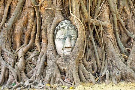 cabeza de buda: Imagen cabeza de Buda en el ba�l.