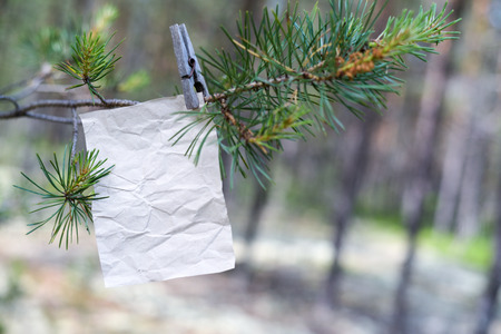 The old message on the branch in the forest, an empty form for filling in the text