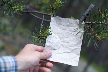 The old message on the branch in the forest, an empty form for filling in the text and person Stock Photo