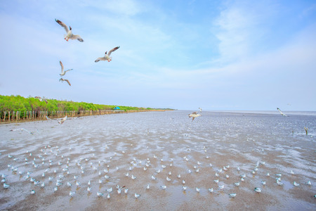 migrate: Seagulls flying food